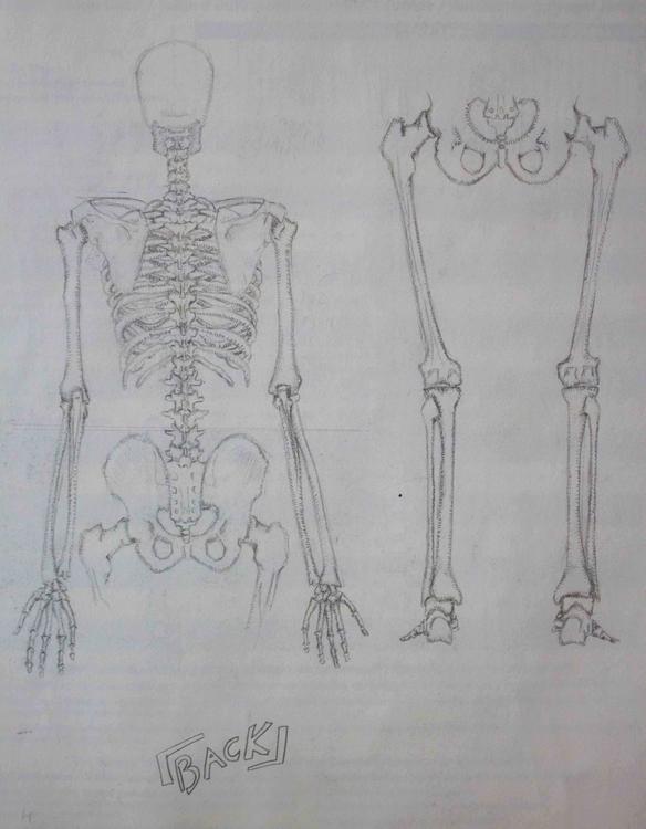 Skeleton - illustration, drawing - mhettich | ello