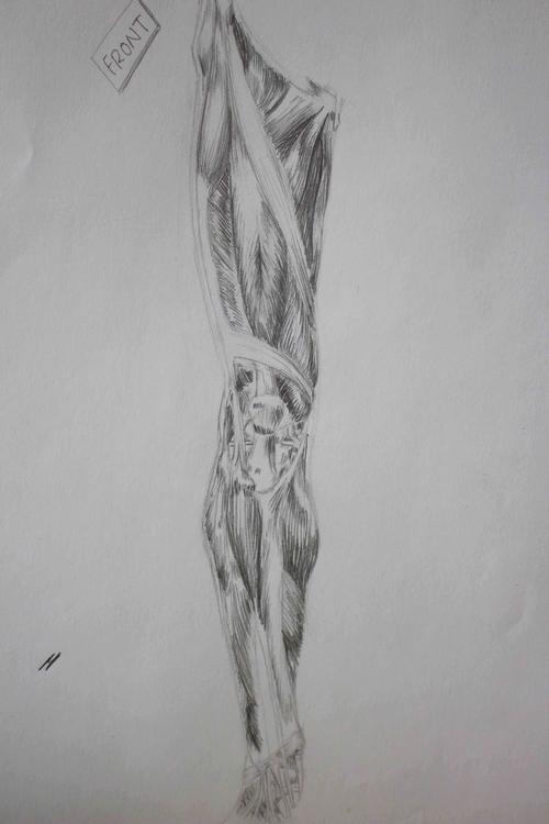 Leg Mucles - illustration, pencil - mhettich | ello