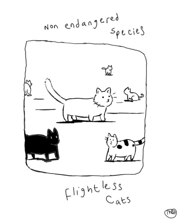 cats, humor - viperxmns | ello