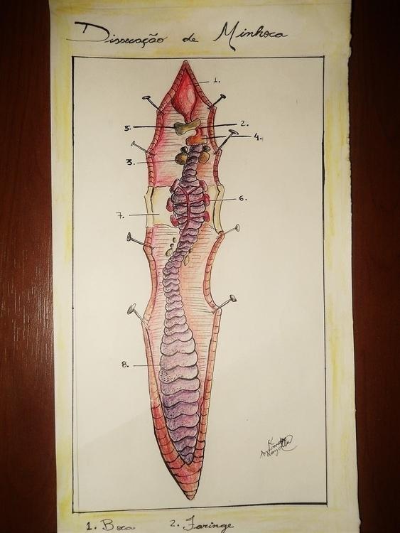 worm, open, scientificillustration - amandaloyolla | ello