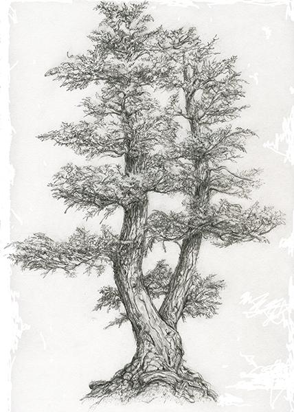 illustration, drawing, environment - lyn-1488 | ello