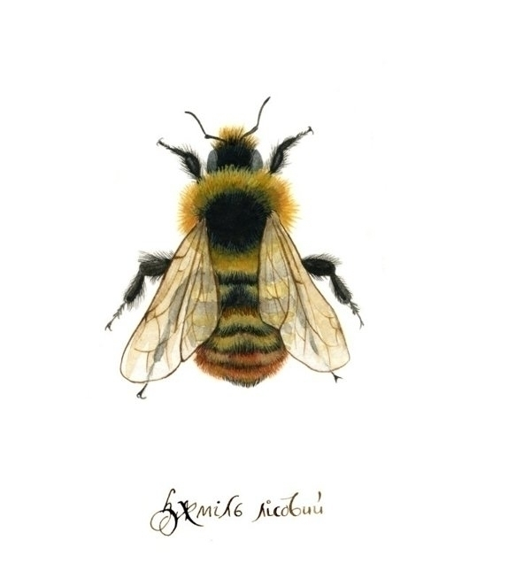 illustration, watercolor, bumblebee - smugasta | ello
