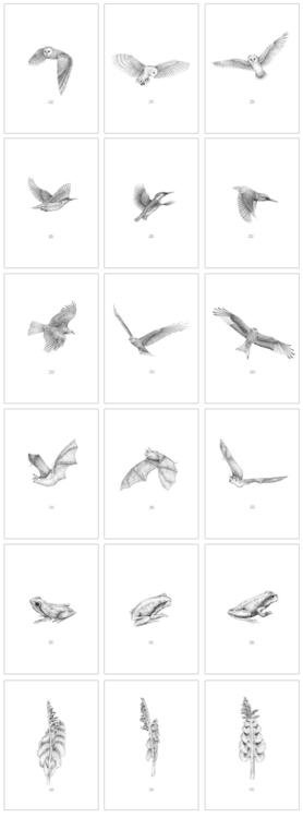Extinction - drawings - carolewilmet   ello