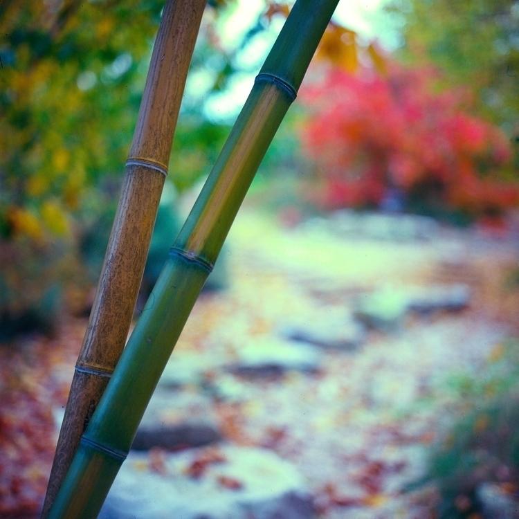 Bamboo path - photography, filmphotography - jacopocaggiano | ello