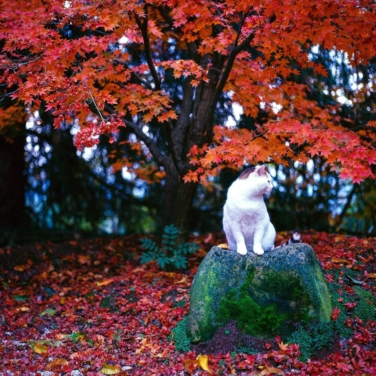 cat tree - japan, stone, photography - jacopocaggiano | ello