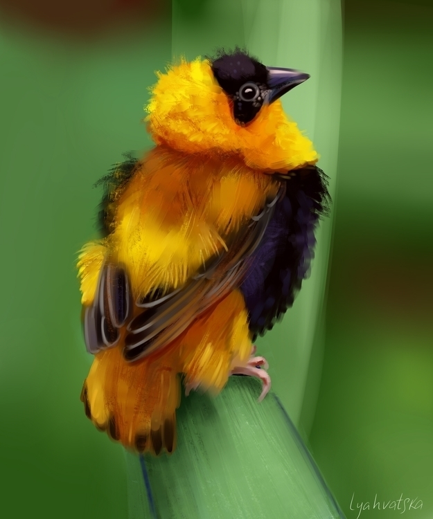 art, bird, color, colorful, cg - natalialyahvatska   ello