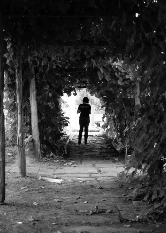 Rose Garden - photography, matthodel - matthewhodel | ello