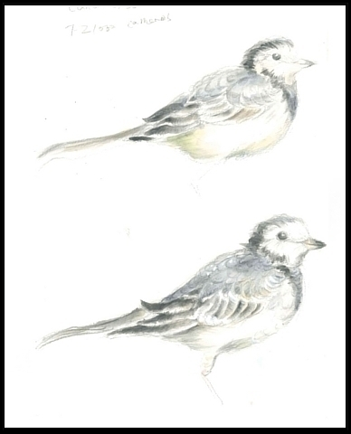 Sea Bird - Printing Watercolour - mwchau | ello