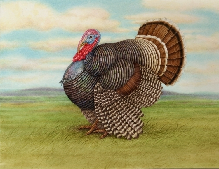 turkey - karenkluglein   ello