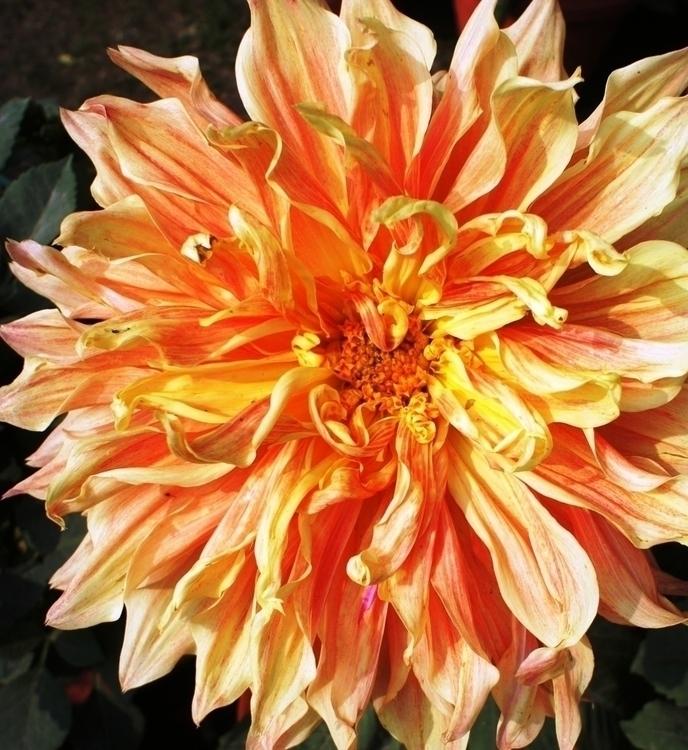 beauties - photography, flowers - baljitchadha   ello