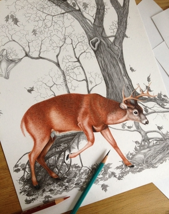 Work progress. White tailed dee - eleandmac | ello