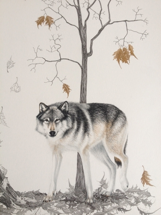 Wolf - pencilart, draw, drawing - eleandmac | ello