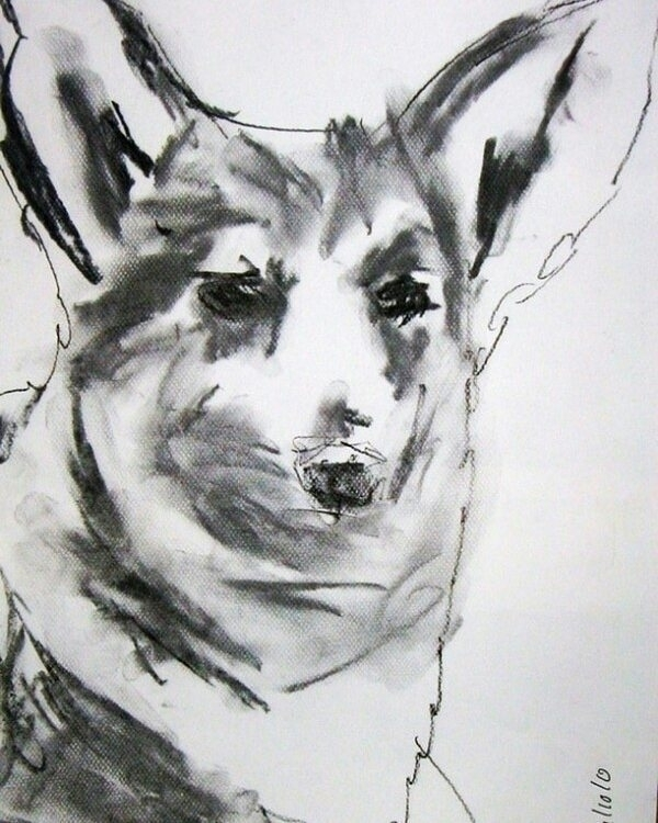 Welsh corgi - dog, dogs, charcoal - kleckerlabor-5193 | ello