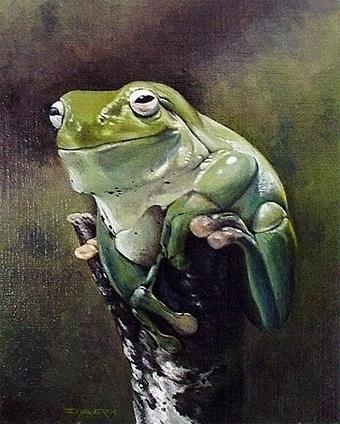 Frog Gap - ziyae   ello