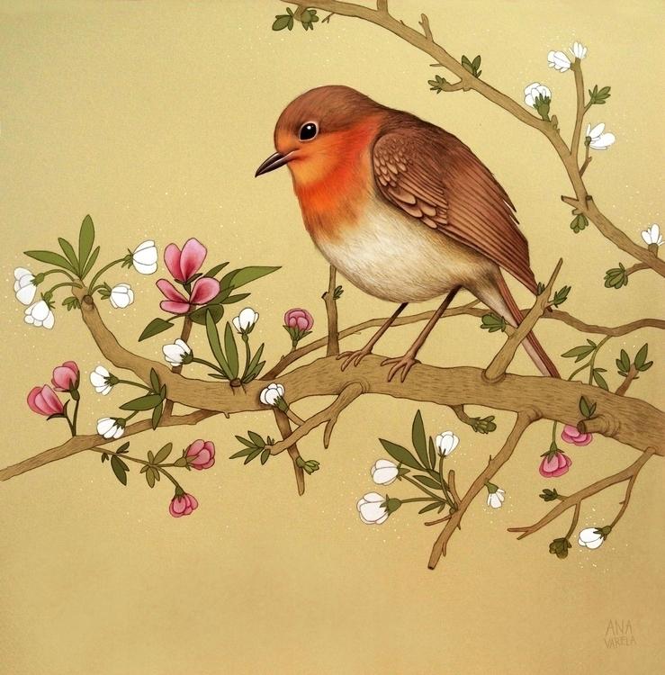 anavarela, bird, robin, pencil - anavarela | ello