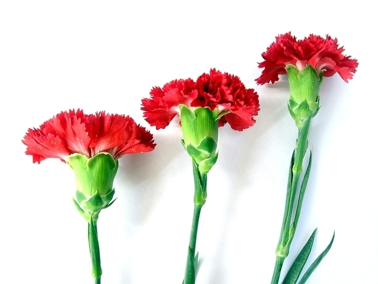 flowers, flower, floral, photography - alvimann   ello