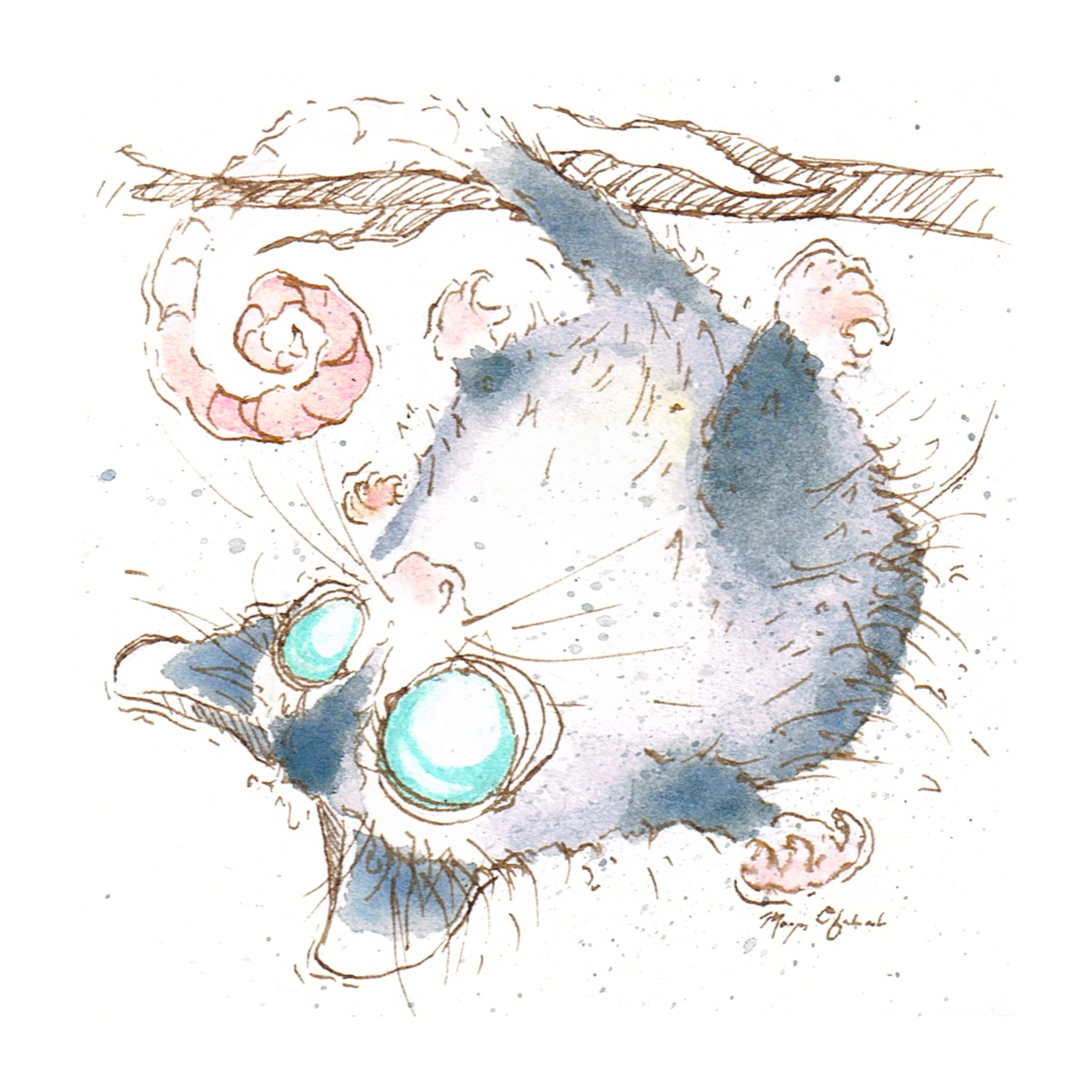 Opossum - opossum, possum, illustration - morganofsharick | ello