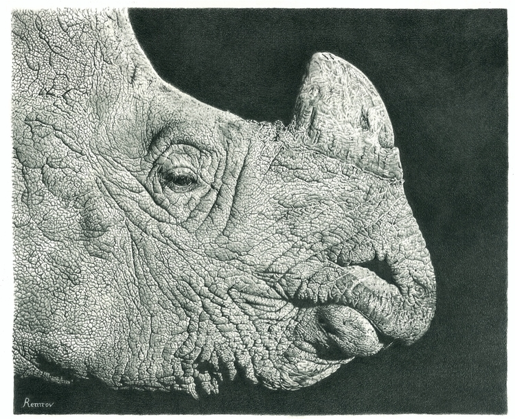 Rhino pencil drawing - rhino, wildlife - remrov | ello