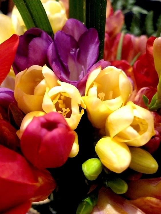 Flowers - flower, flowers, flor - alvimann | ello