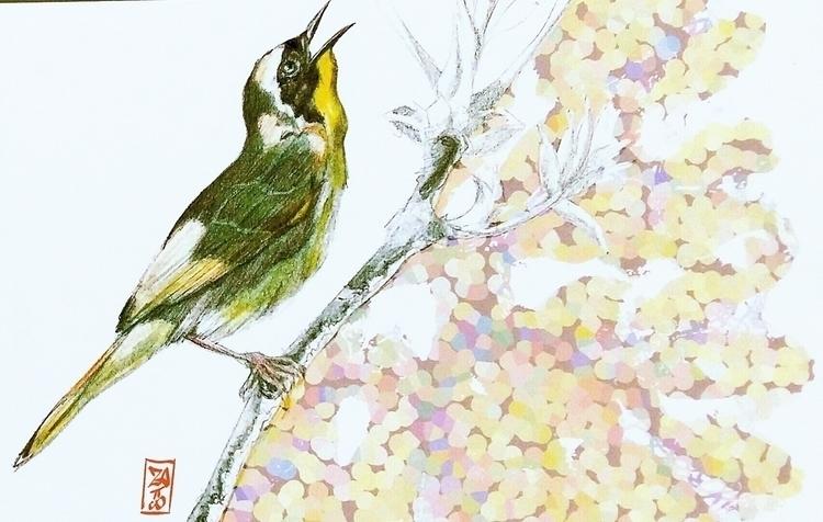 ornithological project - illustration - manzapy | ello