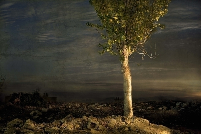 photography, tree, romantic, night - burcuguettler | ello