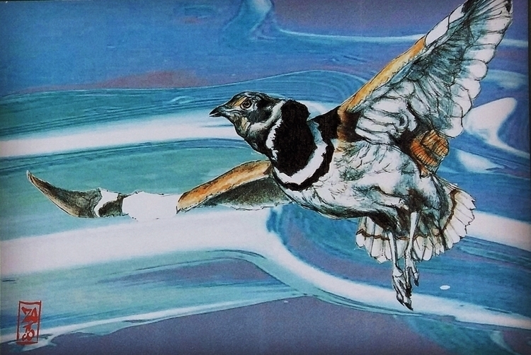 ornithological project - illustration - manzapy   ello