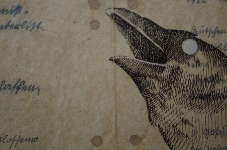 Detail - illustration, drawing, crow - giuliafederici | ello