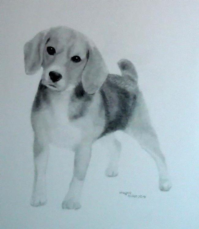 Beagle - waynemiller   ello