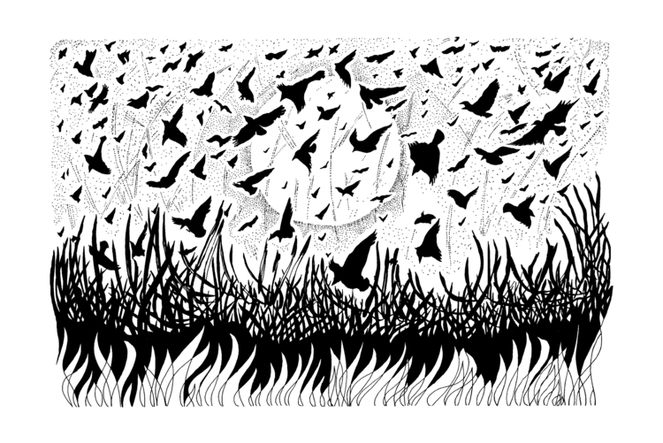 Birds, Martin McGuire - illustration - martinmcguire | ello