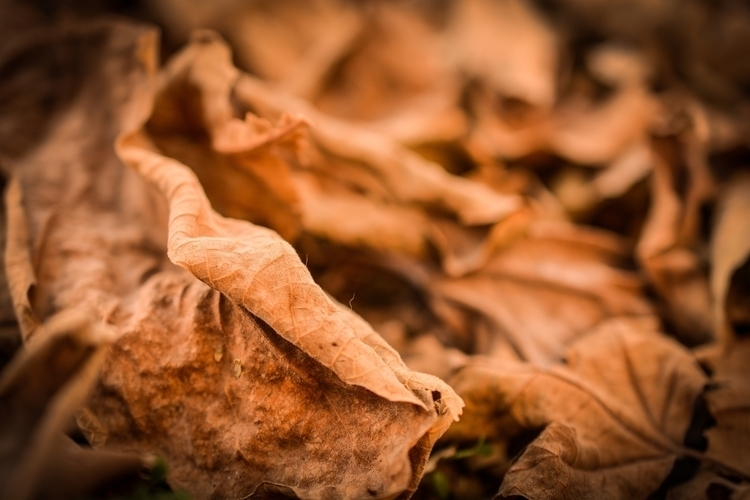 photography - abuthwar | ello