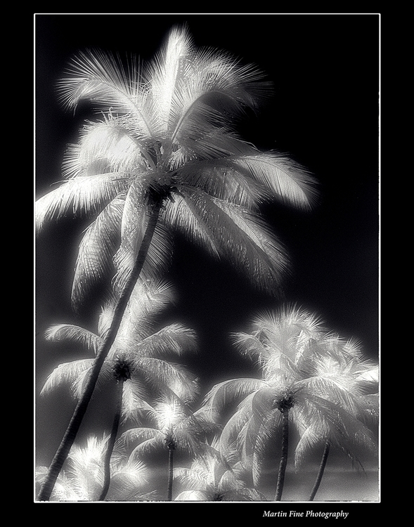 Miami Palms Infra Red - martfine | ello