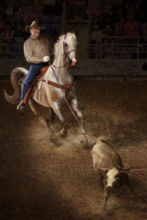 Roper - cowboy, roping - kimwhit-2847 | ello