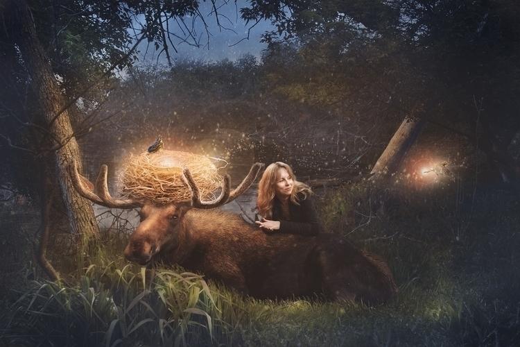 moose, birds, gettingalong - kimwhit-2847 | ello