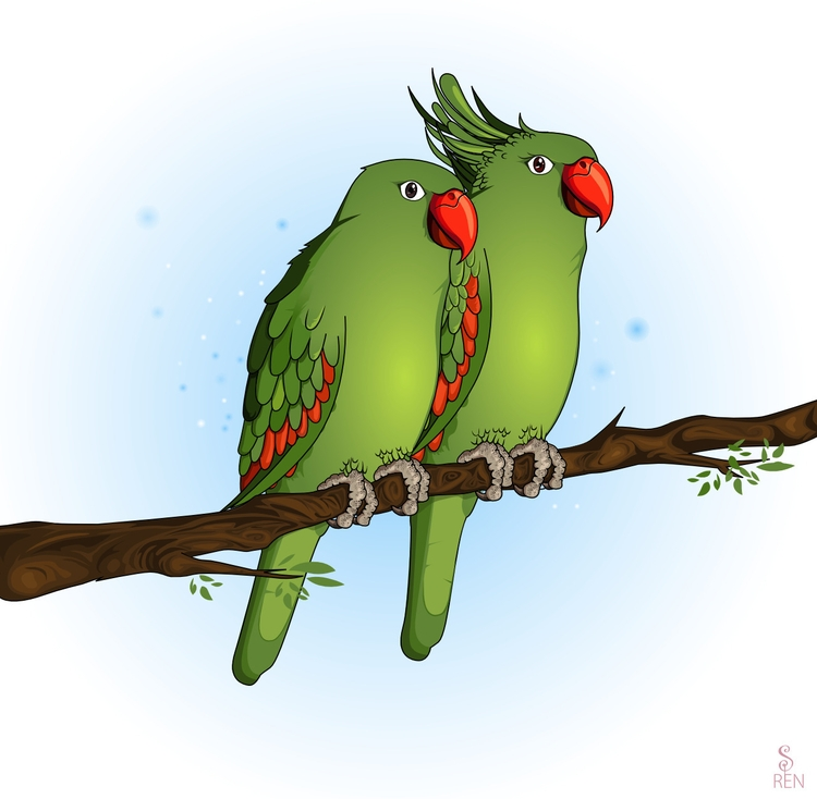 Parrots - gift - illustration, drawing - himagni | ello