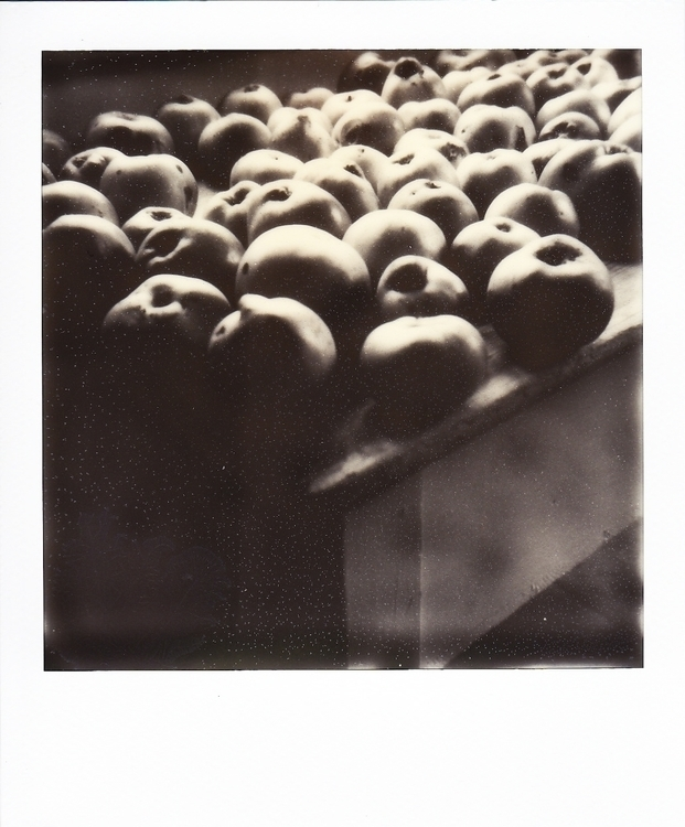photography, polaroid, apples - juliahs-1141 | ello