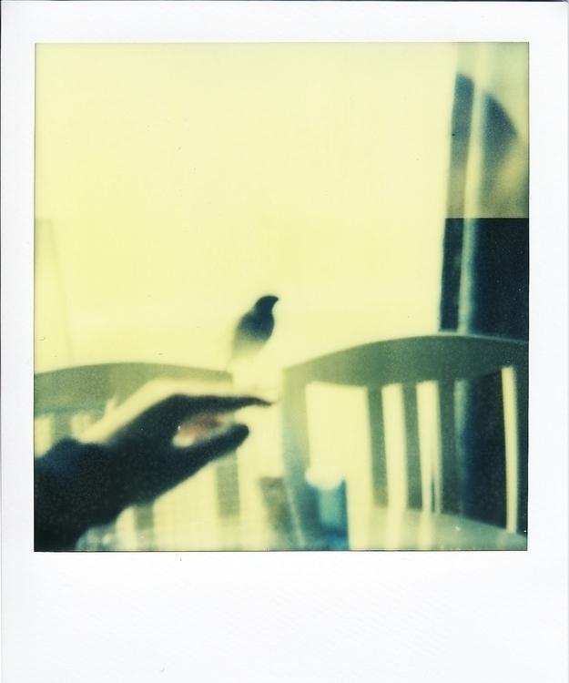 photography, polaroid, bird, pet - juliahs-1141 | ello