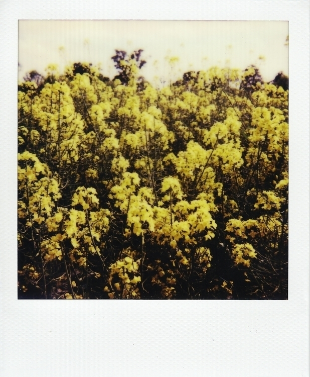 photography, polaroid, field - juliahs-1141 | ello
