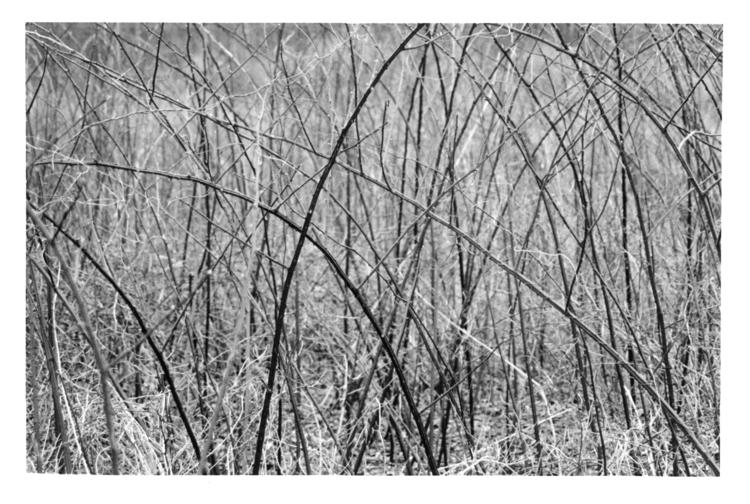 Scarred - photography, film, blackandwhite - devon_kelly | ello