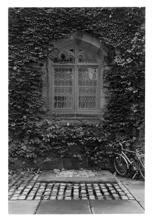 Ivy League- Princeton Universit - devon_kelly   ello