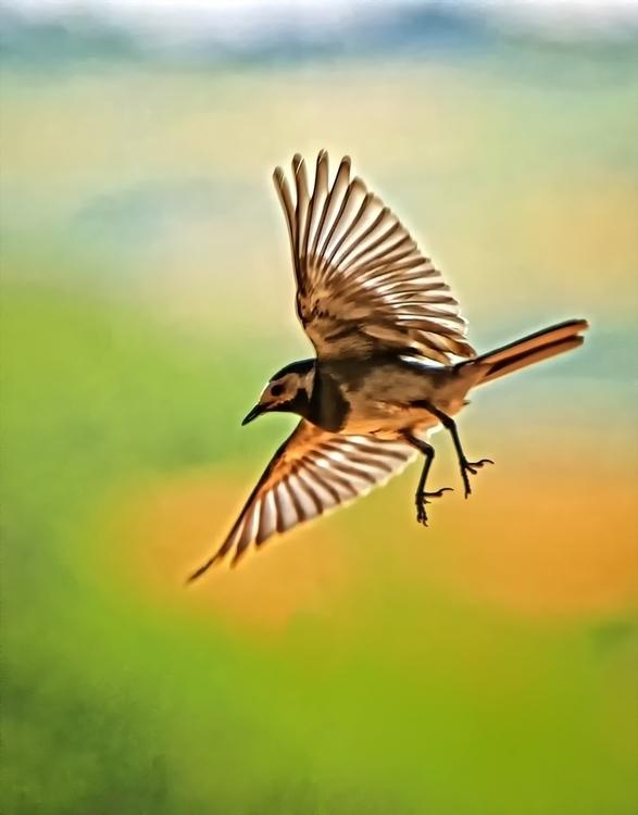 5, photography, digitalart, birds - pierocefaloni | ello