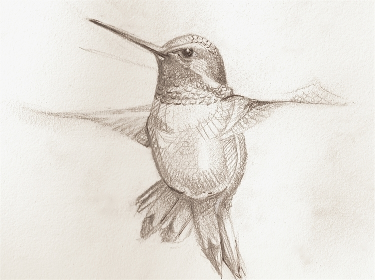 Hummingbird study private commi - artfulu | ello