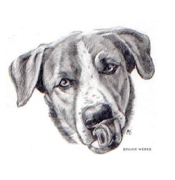 275 / Lickety-split Graphite - dog - paige-2875 | ello