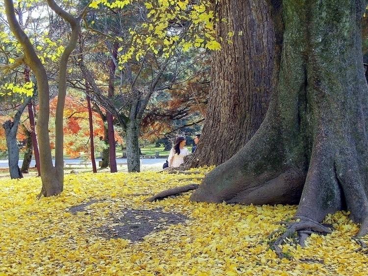 Imperial Garden, Kyoto, Japan - elinorekoenigsfeld | ello