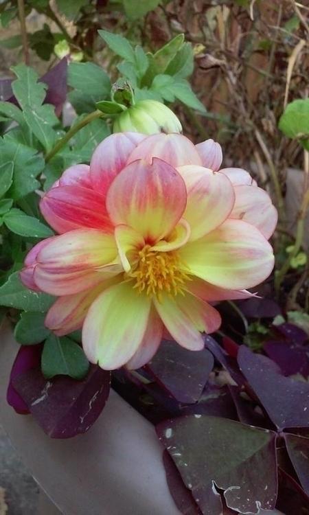 Flower Cleveland Botanical Gard - angelasabetto | ello
