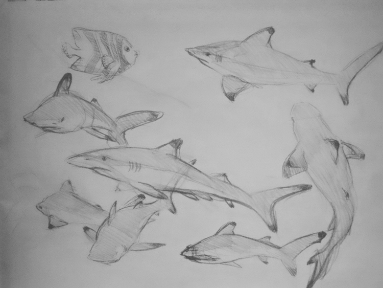 Sharks composition study Charco - juliusiv | ello
