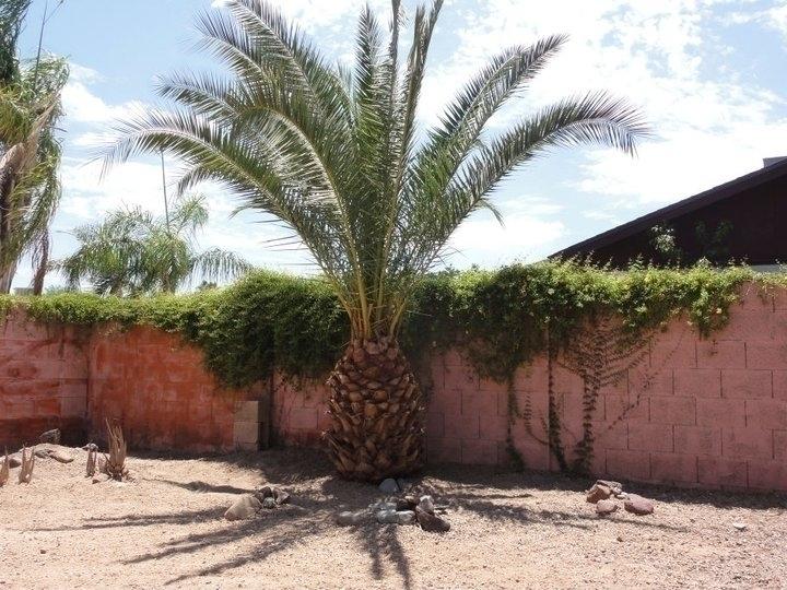 Palm Tree - photography - lindawilliams | ello