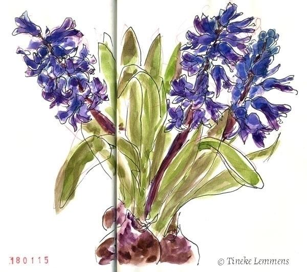 Hyacinth - flowers, hyacinth - tineke-1461 | ello