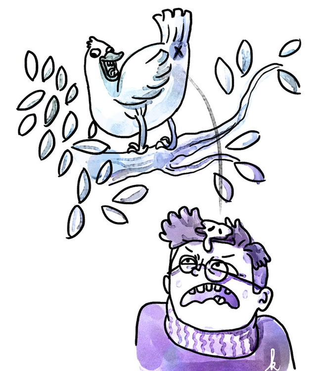 bird poo hits head - illustration - ktoons | ello