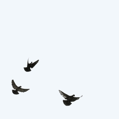pitchen, birds, flying, watercolour - robincottage | ello