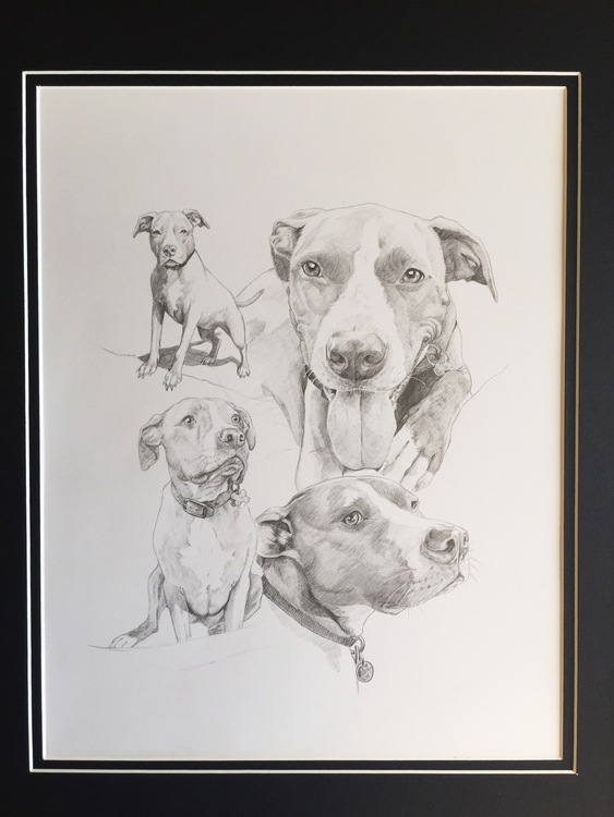 pet portraiture - illustration, drawing - corinnavargas | ello